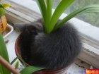 Посадили ананас