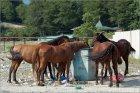 Так пасутся кони