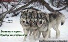 Волка ноги кормят