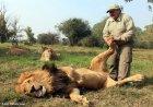 Лев и смотритель зоопарка